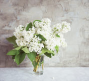 white lilac on a cement background